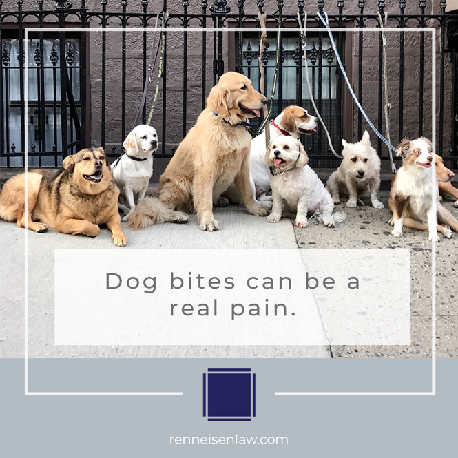 Read more about the article Dog bites can be a real pain.